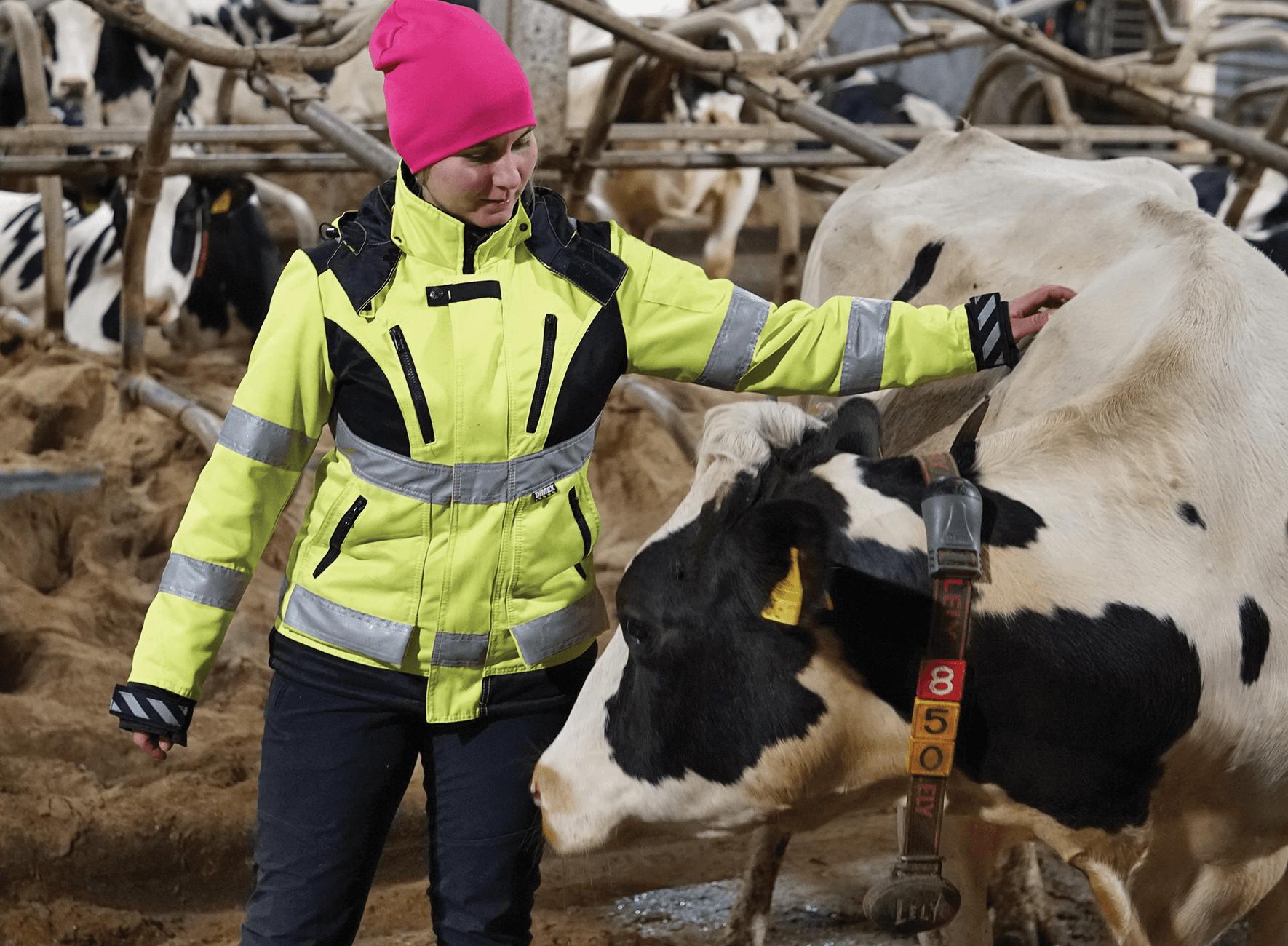 Maatalousyrittäjä kiittää ja rapsuttaa tyytyväistä lehmää
